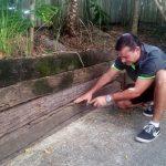 Building Pest Inspection